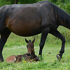 Mother and Foal by Barry Goble
