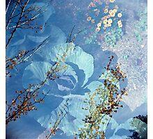 Marigold Photographic Print