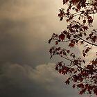 Red Leaves Stormy Skies by Melodie Douglas