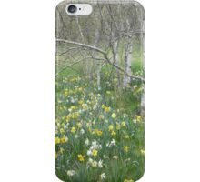 Daffodils and Birches iPhone Case/Skin