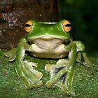 Helen's Flying Frog by Jodi Rowley