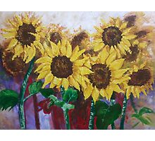 Glorious Sunflowers Photographic Print
