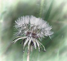 Tick Tock Dandelion Clock by Lynn Bolt