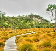 The boardwalk to Snake Hill by Michael Matthews