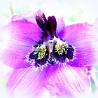 Delphinium Closeup by ©The Creative  Minds