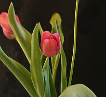 Red Tulips by Joy  Rector