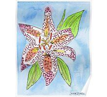 Star Gazer Lilly Poster