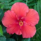 Hibiscus Perfection by Adam Bykowski