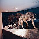 Wolf Pack by Santamariaa