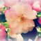 *AVATAR/Pink floral - Gorgeous flower Cards*