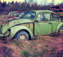 THE OLD BUG by SPICTURE