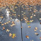 Autumn pavement by Carol Dumousseau