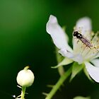 White Flower by WesleyB