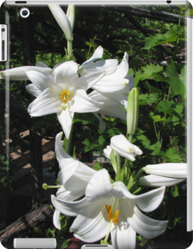 Madonna Lilies (Lilium candidum) - iPad/iPod/iPhone/Samsung cases by Dennis Melling