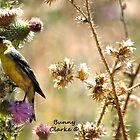 Lesser Goldfinch by Bunny Clarke