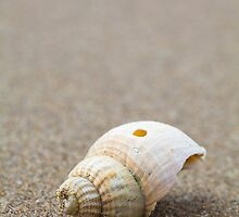 One Little Shell by Heidi Stewart