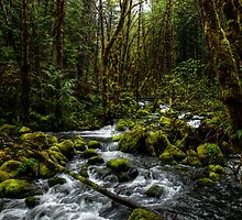 It's About Time  by Charles & Patricia   Harkins ~ Picture Oregon