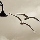 Seagulls in Lyme Regis by mickeyrose