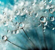 Indigo with White Sparkles by Sharon Johnstone