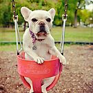 FRENCH BULLDOG ON A SWING by CRYROLFE