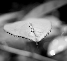 Leaf by evemarceau