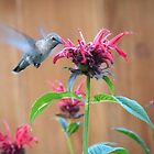 The Hummingbird and the Bee Balm by Martha Sherman