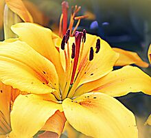 Gilded Lily by naturelover