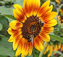 Sunflower Friends by AnnDixon