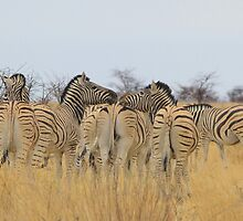 Zebra - African Wildlife Background - Feel the love  by LivingWild