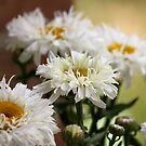 Summer Daises by Lori Peters