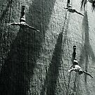 The Divers by hans p olsen