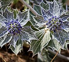Sea Holly in fractalius by missmoneypenny
