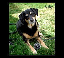 Ripley by Lydia Marano