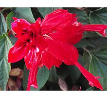 Right Red Flower Photographic Print