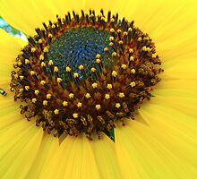 Sunflower city by MarianBendeth