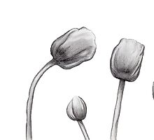 Sketched Tulips - B&W by katherinepaulin