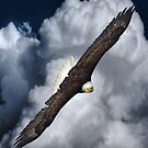 Eagle on the Turn (with Clouds) by Skye Ryan-Evans