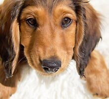 Perfect puppy by Sarah Guiton