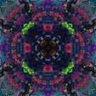 Cacti by alcrose