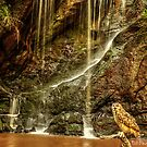 European Eagle Owl in front of Waterfall by Norfolkimages
