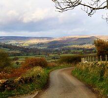 Ewe Cote Farm by maureen bracewell