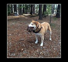 Laci with pinecone by Lydia Marano