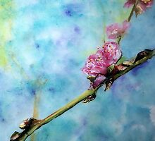 Peach blossom by Rosalind Clarke