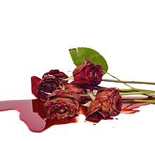 Roses and Blood by JLHphoto