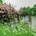 Bromptom Cemetery  by Eve Parry