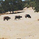 Water buffalo  by Santamariaa