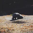 Rhinos by Santamariaa