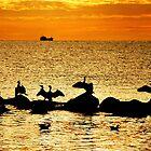 Baltic Sea morning birds by jchanders