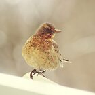 Bird II  by LenkaOBS