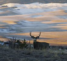 Buck In The Early AM  by Gary Benson